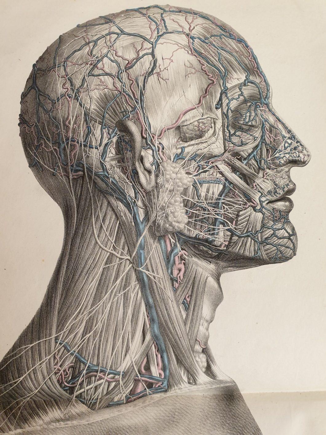 Anatomische Studie aus Bibliothek
